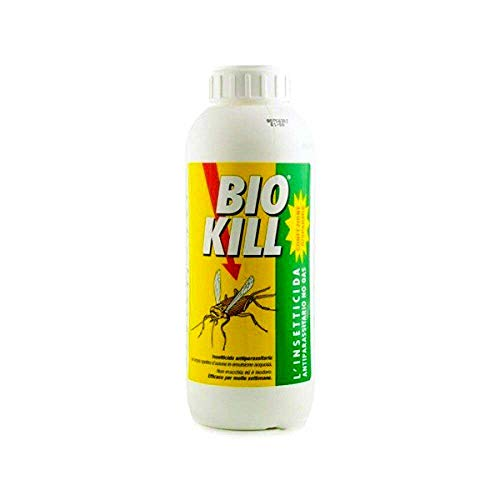 Blatte e scarafaggi, cause e rimedi  Articolo