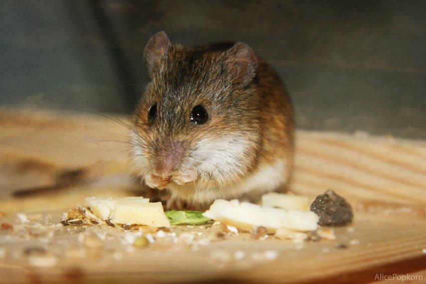 cosa attira i topi come esca