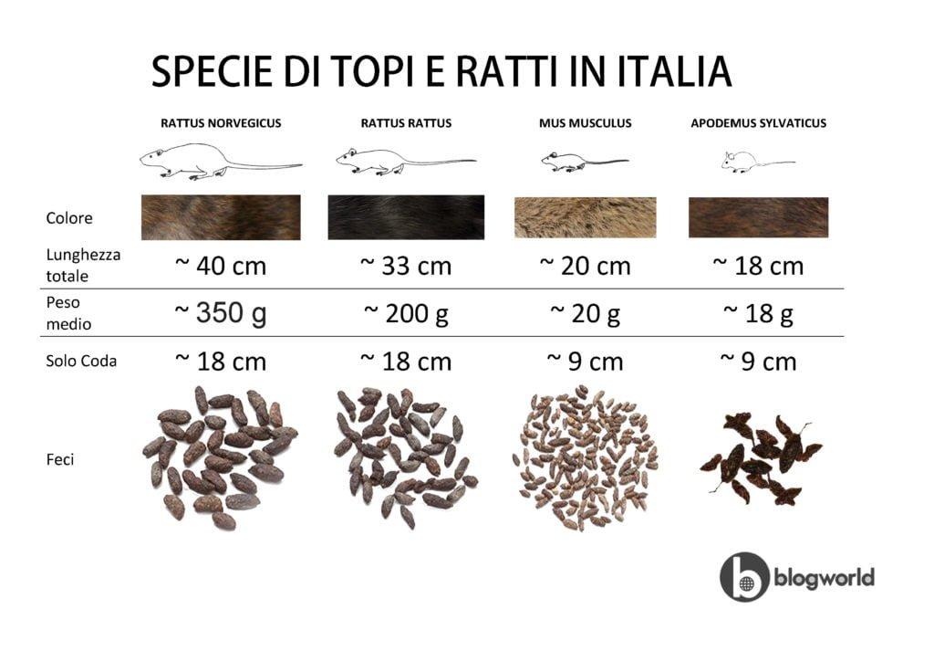 Specie di Topi e Ratti in Italia