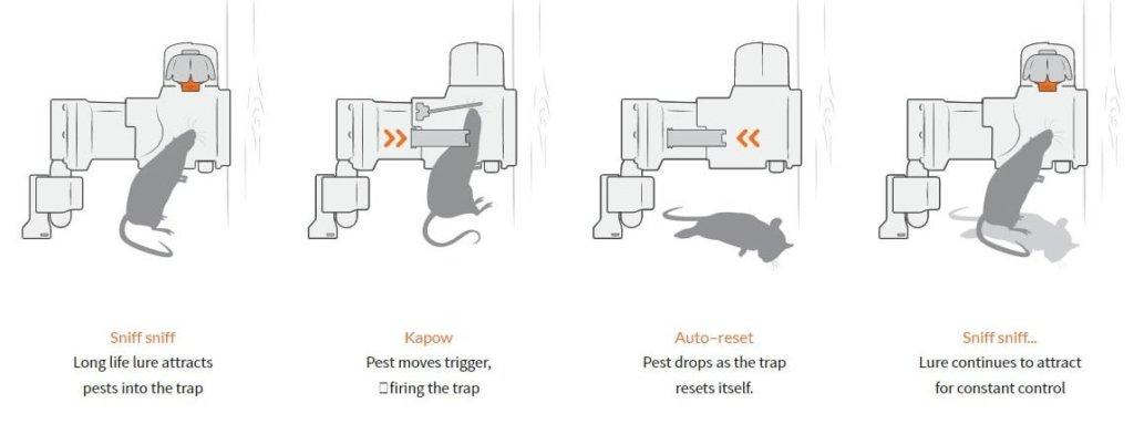Le migliori trappole per topi  Articolo