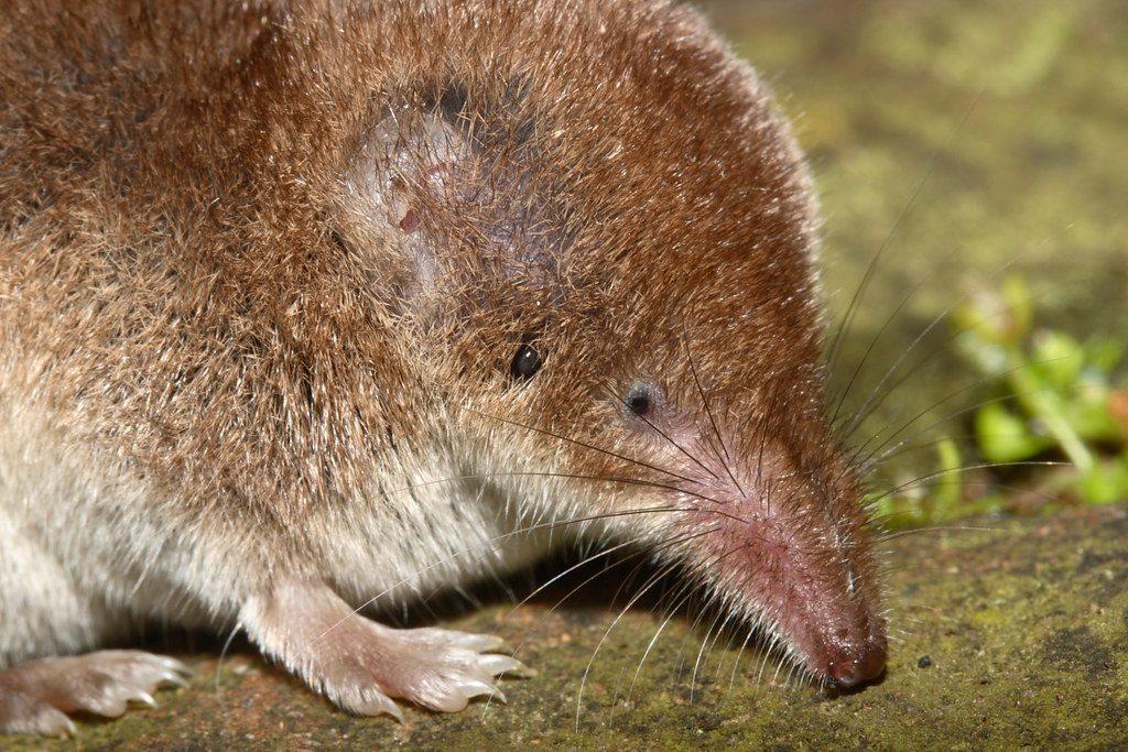 scacciare i topi dal giardino