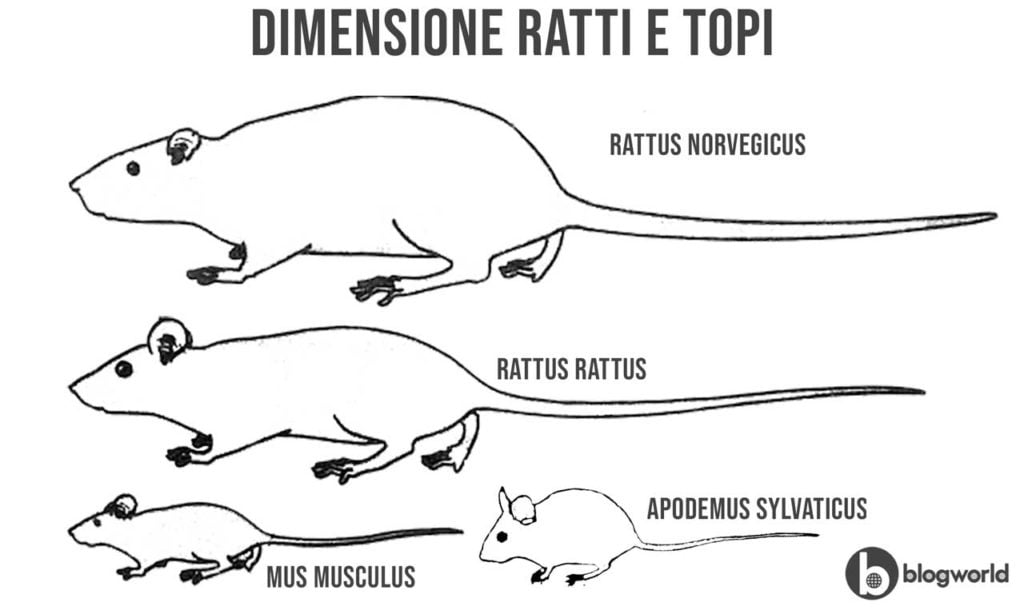 Differenza tra topi e ratti