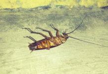 migliore gel per scarafaggi