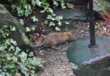 topi in giardino