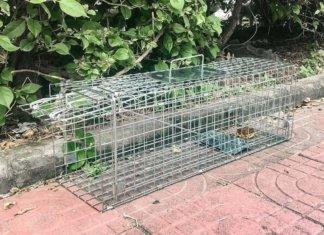 trappole per topi a gabbia