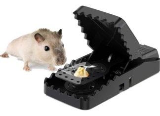 trappole per topi a scatto